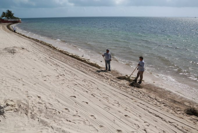 Todos contra el sargazo, estrategia para limpieza de playas